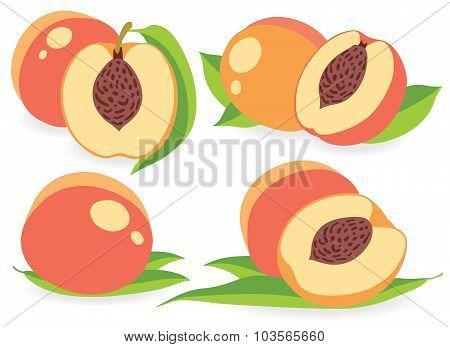 Peaches Vector Illustrations