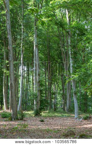 Refreshing Forest in summertime