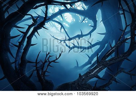 Dark Forest With Thorny Bushes