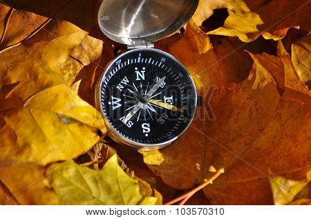 Compass On Autumn Leaves.
