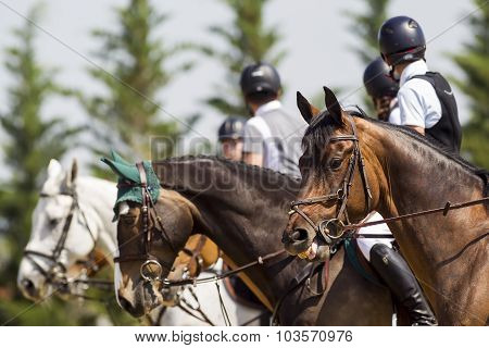 Horses Getting Ready In Line For The Competition Matches Riding Round Obstacles