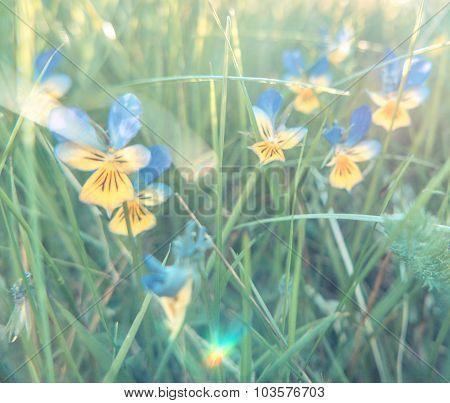 Pastel Soft Summer Wild Flowers