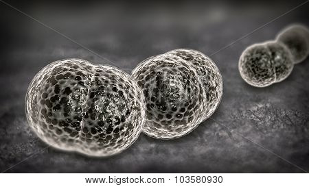 3D microscope close up of meningitis bacteria also known as meningococcus