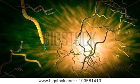 Spirilla Bacteria