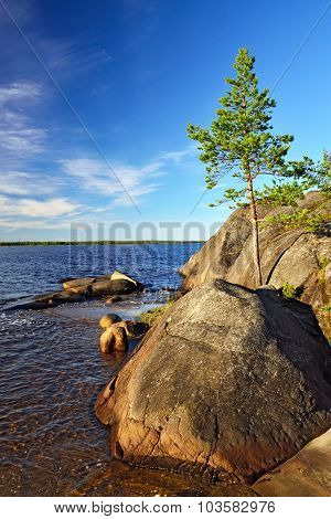 Lonely Pine On The Rock. Shore Of The White Sea, Karelia, Russia