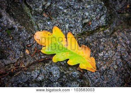 wet autumn leaf on pavement at rainy day - soft photo