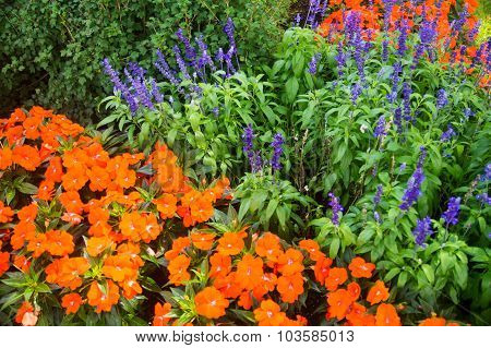 Orange Poppies And Purple Lupins