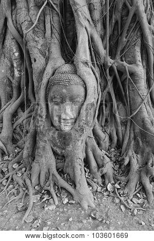 Buddha Head Ayuthaya