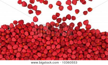 Falling Red Apples Isolated