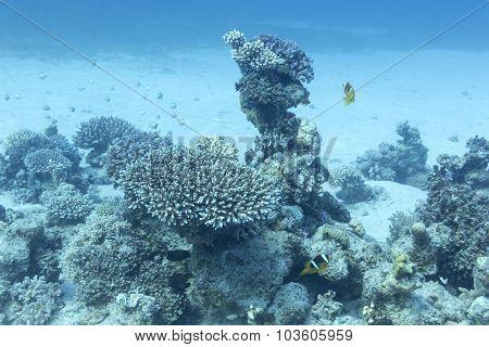 Coral Reef In Tropical On Great Depth, Underwater