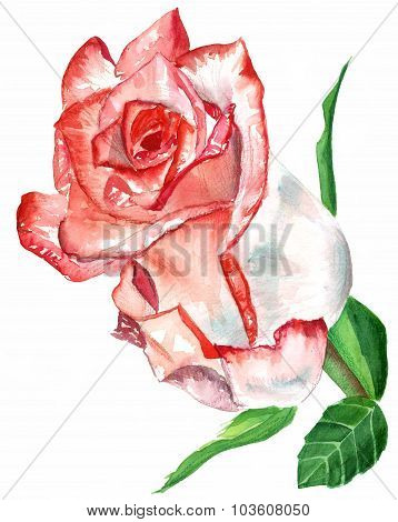 A vintage-styled watercolour drawing of a pink rose on white background