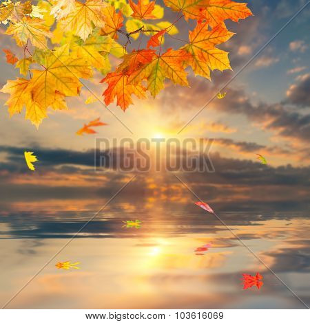 Branch With Autumn Foliage