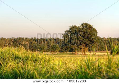 Autumn rural landscape.