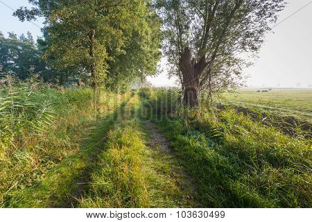 Trail In A Rural Landscape