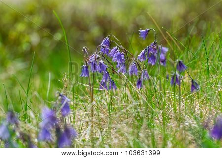 Beautiful Blue Flowers In The Grass