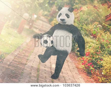 Panda Football Player. Chasing Soccer Ball Foot Against Backdrop Resort Thailand. Juggling Ball Bear