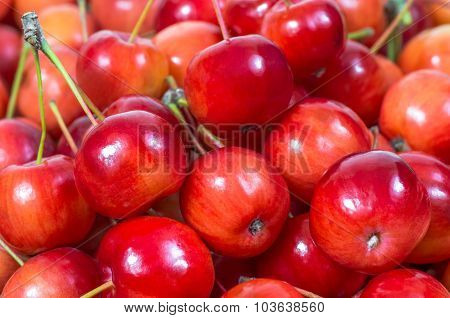 Very beautiful red paradise apples