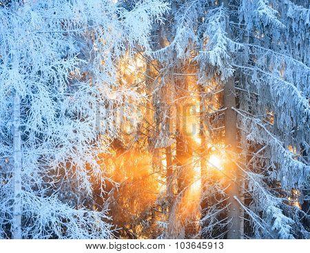 Sun rays through frosty trees