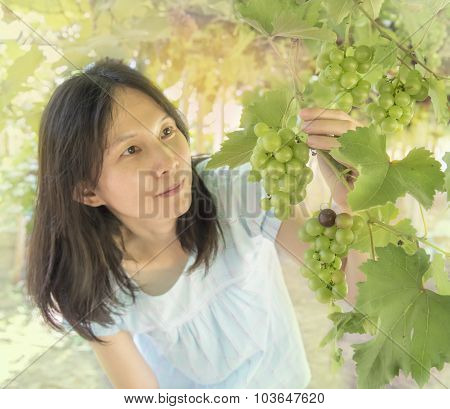 Vine Yard At Thailand, Beatiful Asian Women Reach Out For Grape Bunch