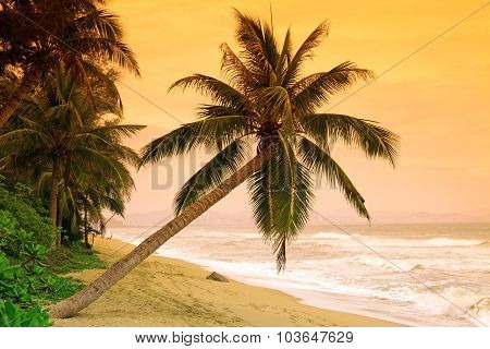 Palms On Tropic Island