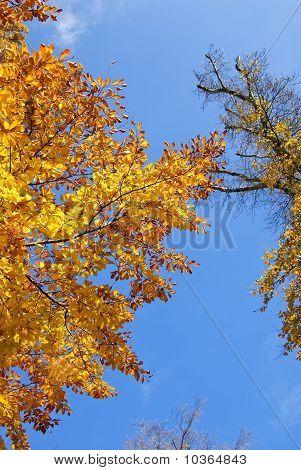 Tree autumn leafs