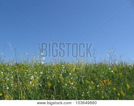 Green meadows, clear blue sky. Summer, background, Sunny weather