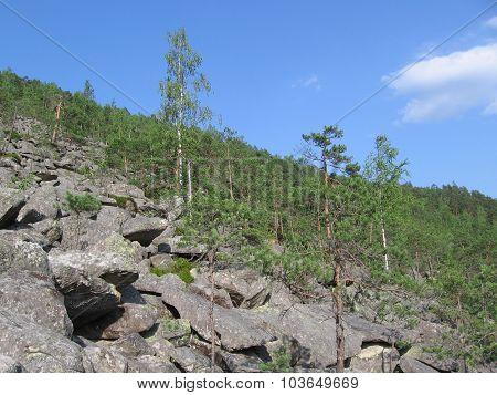 Gray rocks, green pines, blue sky, mountains