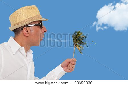 Man blowing a small palm tree with coconuts