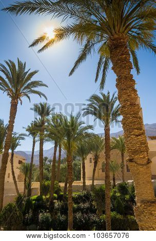Some Palmtrees With Sun,  Houses And Mountings On Backrgound.