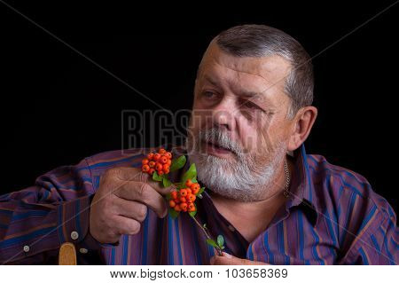 Portrait of a thoughtful senior man in striped shirt with small branch of Chinese Schizandra