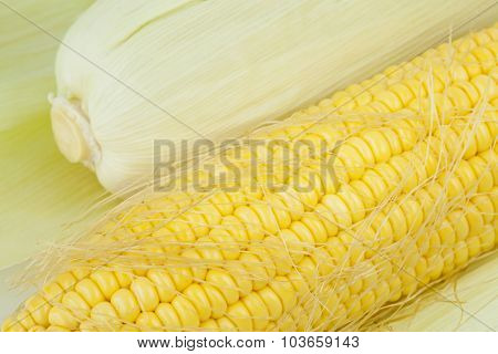 Fresh Corn Cobs