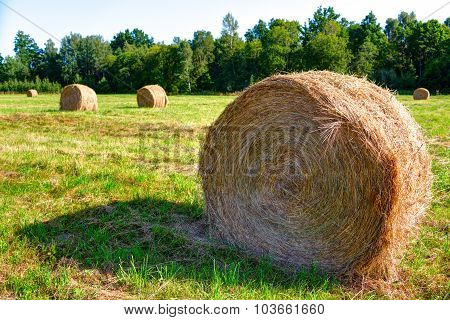 Rolls of hay laying on the meadow