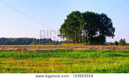 Lone green tree in the meadow