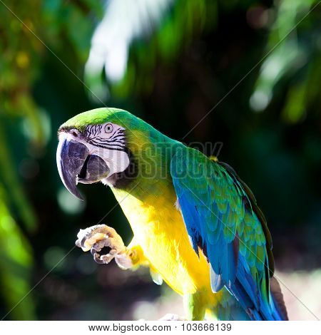 Macaw On A Tree