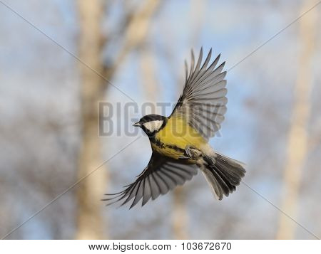 Flying Great Tit Against Autumn Background