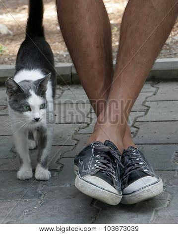 Spotted Cat Near The Man's Feet In Sneakers. Friendship Man And Animal.