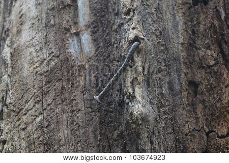 iron nail in tree