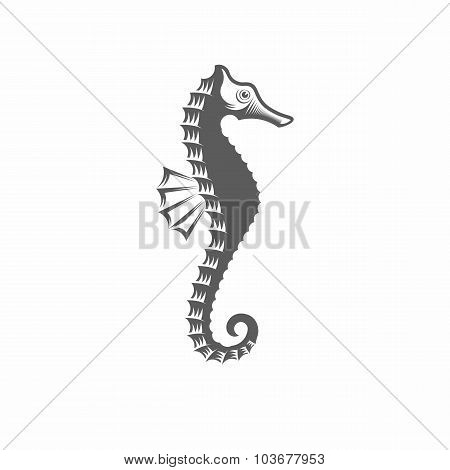 Seahorse black and white vector illustration