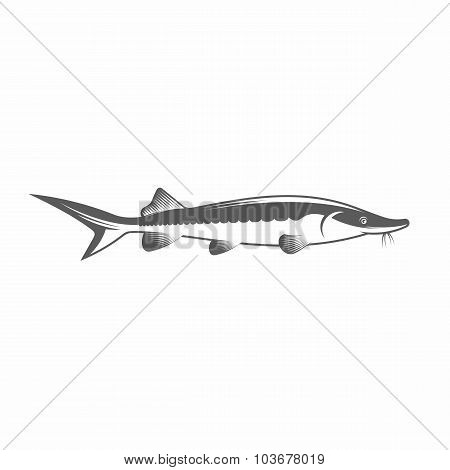 Sturgeon black and white vector illustration