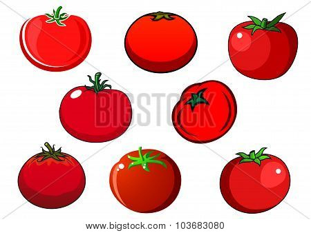 Fresh red isolated tomato vegetables