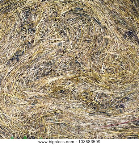 Lots of twisted dry hay closeup