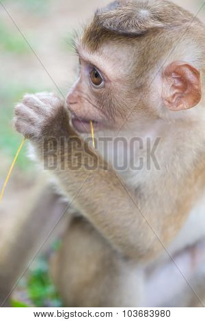 monkey forest child