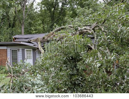 Tree Falls And Demolishes A Small House