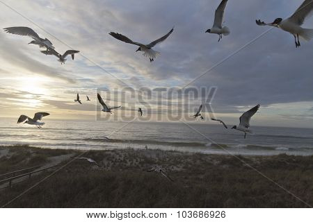 Beachcomber, Seagulls And A Dusky Sea