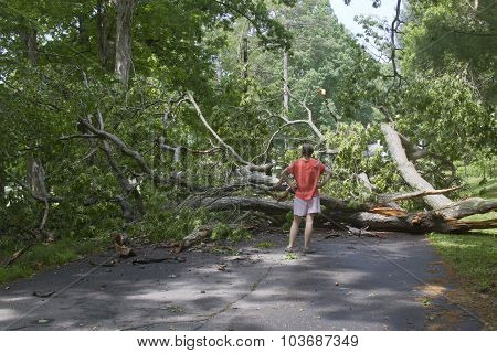 Storm Fells Tree Blocking The Road And Pedestrians