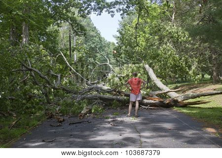 Tree Down Across Road Blocking Access