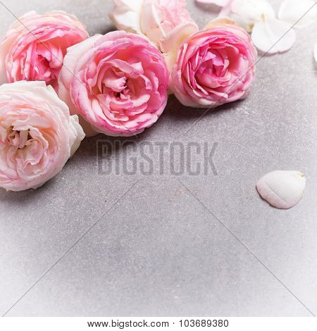 Postcard With Fresh Pink  Roses On Grey Slate Background.