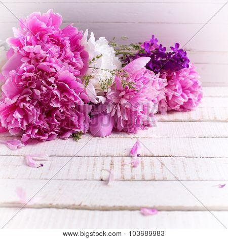 White And Pink Peonies Flowers