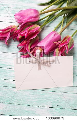 Fresh Pink  Tulips And Empty Tag For Text