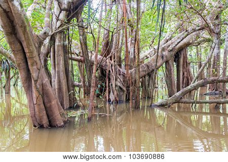 Trees In A Flooded River